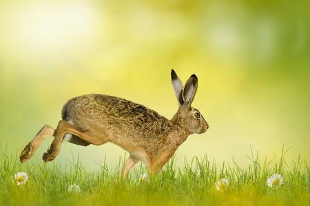 huevos de pascua: Conejito, conejito de Pascua en marcha sobre un prado verde de la flor