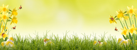 Easter, katicabogár repül a zöld rét nárciszok