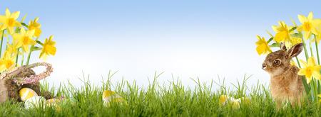 Paas haas zitten in de voorkant van Daffodil met een mand van Pasen en paaseieren