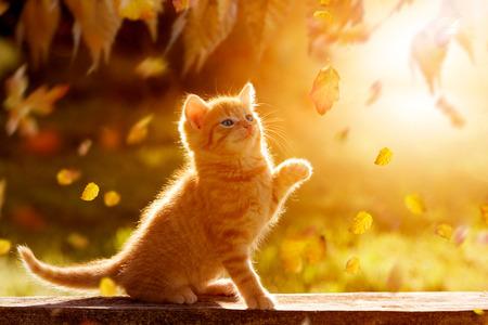 jonge kitten spelen in de herfst met gebladerte Stockfoto