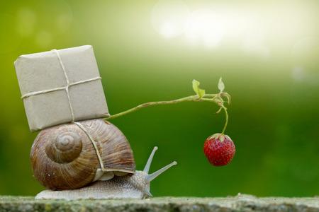 Snailmail, slak met pakket op het slakkenhuis, Versneld