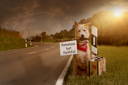 Abandoned dog sits tied with suitcase at the roadside