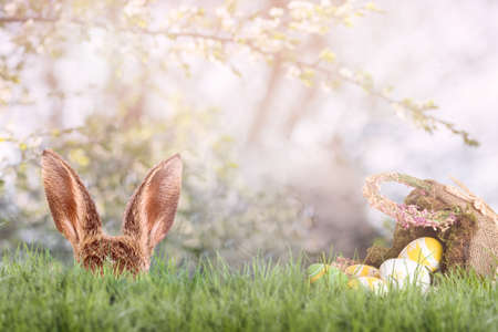 Easter bunny hides behind blades of grass with an Easter basket and Easter eggs at Easter time
