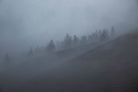 Wooded mountains in deep fog. Siberian larch with fallen needles. Leafless tree branches in rainy autumn. Purity, the power of nature. Fairy, greatness of the wild. Background. Panorama. Wide angle. Stok Fotoğraf