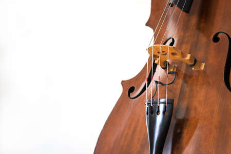 Contrabass details. Wooden string instrument close up. White background