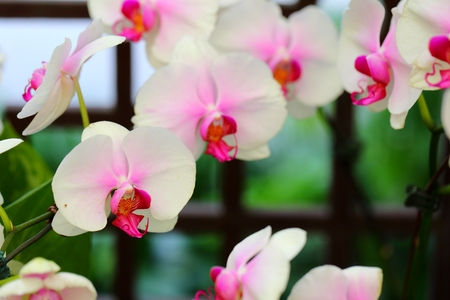 Beautiful orchid flower in tropical garden