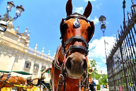 Paseo a caballo por la hermosa y colorida calle de Sevilla, Andalucía, España.