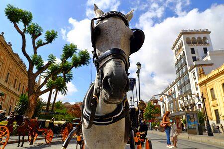 Paseo a caballo por la hermosa y colorida calle de Sevilla, Andalucía, España. Foto de archivo
