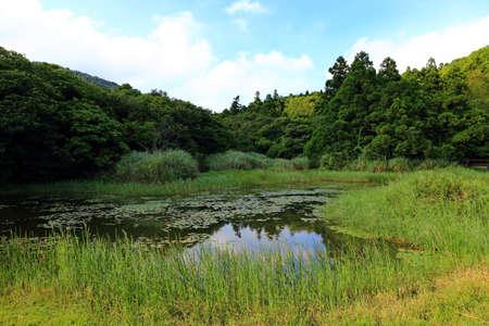 pond near Jingshan bridge near Qingtiangang Grassland, Yangmingshan, Taiwan