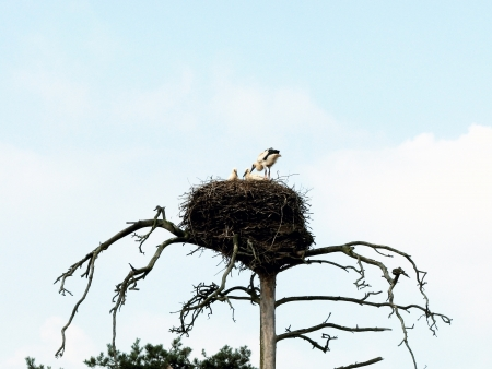 Nest of the storks photo