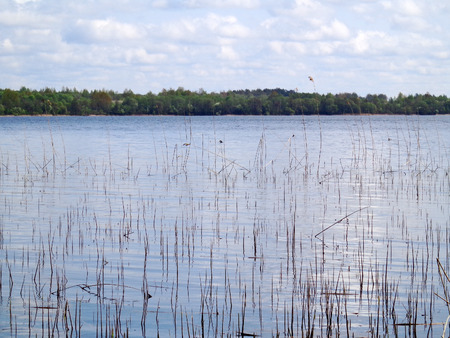 View of the lake in a spring day
