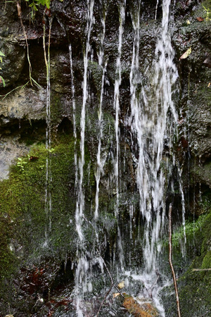 trickle: Stones moss and streams of the water