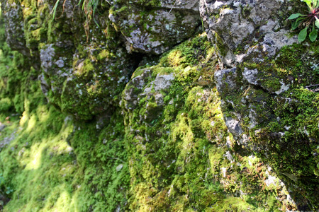 plumb: Moss on the surface of the rock