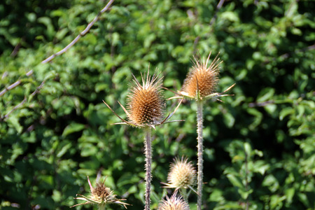 thorny: Thorny flowers on a background of the green plants Stock Photo