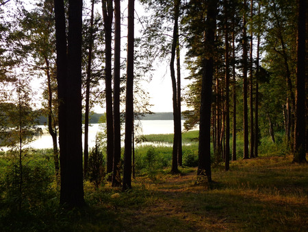 View of the forest and the lake in the evening time