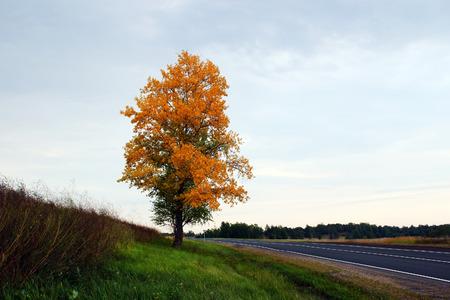 grass verge: autumn landscape