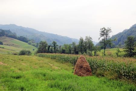 haycock: rural landscape