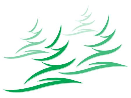 fir: fir trees