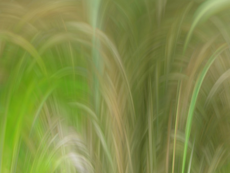 flexure: Abstract background in green-yellow tones