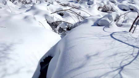 Snowdrifts in the winter forest