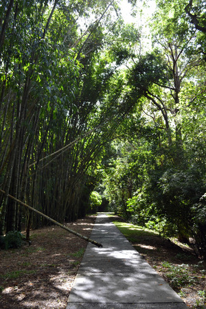 Road and Bamboo in Cairns Botanical Garden, Queensland, Australia Stock Photo