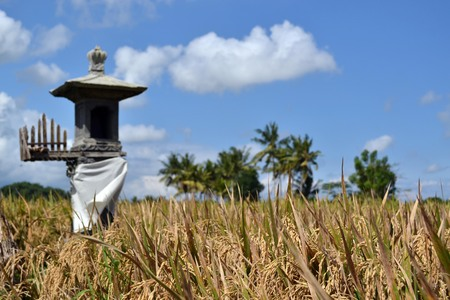 The rice field in Ubud - Bali. A simple view yet amazingly it can be so relaxing. Pic was taken in May 2017. Stock Photo