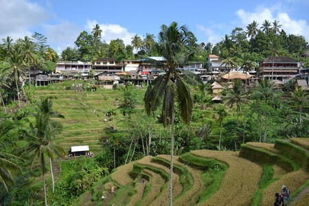 The rice field in (around Jatiluwih and Ubud). Its constructed using a philosophy of subak,