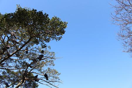 Translation: The birds around Atago Jinja. Taken in Fukuoka, Japan, February 2018. Stock Photo