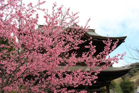 Translation: Kenchoji Zen temple. One of Five Great Zen Temples (Gozan). Taken in Kamakura, Japan - February 2018. Editorial