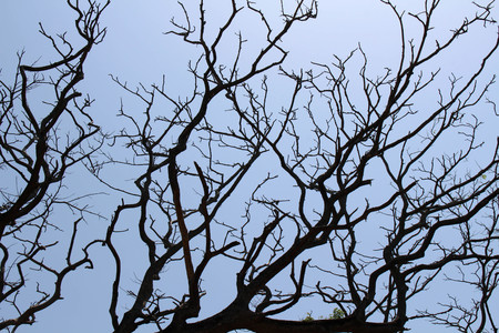 The branches of a tree in Galle, Sri Lanka. Stock Photo