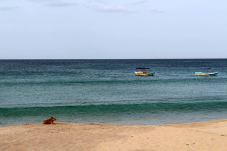 A dog relaxing around white sand beach and lazy wave of Dutch Bay in Trincomalee. Taken in Sri Lanka, August 2018. Stock Photo