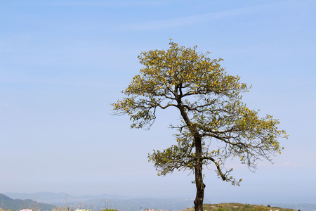 The tree and leaves during spring season in Japan, location up in the hill in Oita. Stock Photo