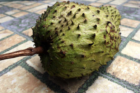 Light green soursop or sirsak in Indonesia. Stock Photo