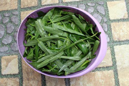 Closeup of fresh kangkung, kangkong, or water spinach.