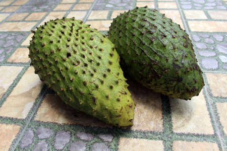 Two green soursops or sirsak in Indonesia. Stock Photo