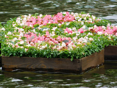 Beautiful floating flowerbed on the pond. Stock Photo