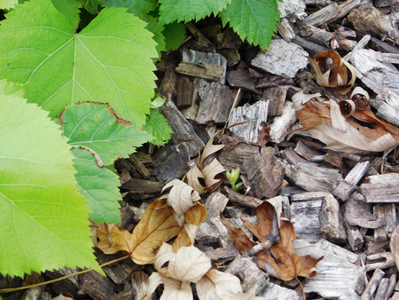 Green foliage and wood chips. Stock Photo