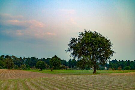 Farmland day scene, with a central tree. nature photography 版權商用圖片