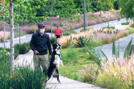 La Mexicana, Santa Fe, Mexico City: June 9, 2020. Older man walking his dog during quarantine, By covid 19