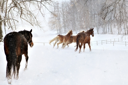 Horses in the winter photo