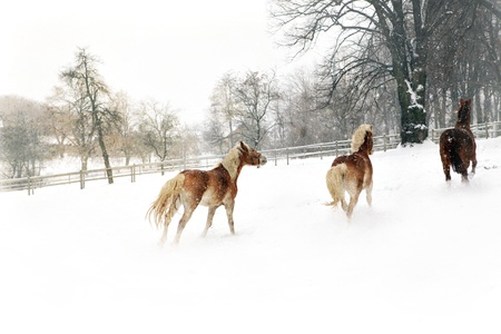 horses galloping in the paddock photo