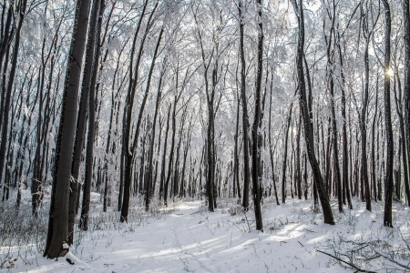 winter blues: winter forest