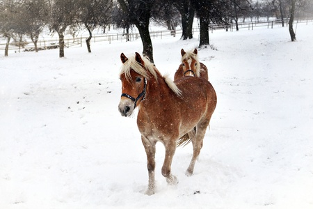 Horses in the winter Stock Photo - 16942873