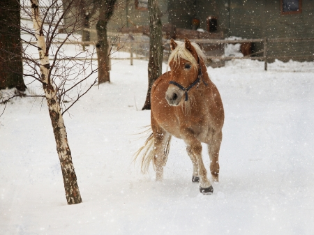 Horse in the winter Stock Photo - 16942870