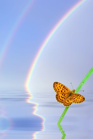 Butterfly sitting on the grass on the background of the rainbow. photo