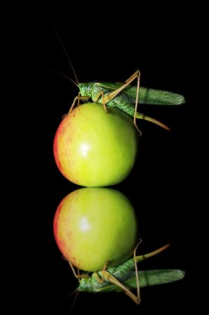 climbed: Locust climbed on the green apple Stock Photo