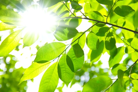 A background of sun rays coming through the leaves and branches of a tree