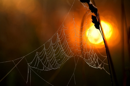 Cobweb glows in the light of the rising sun.
