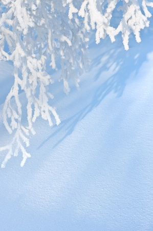 Winter background. Overhanging branches of birch trees in hoarfrost photo
