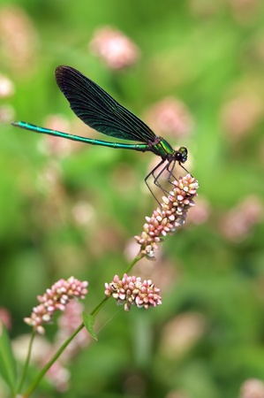 Dragonfly. Macro, close-up shot